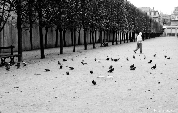 with his birds #2