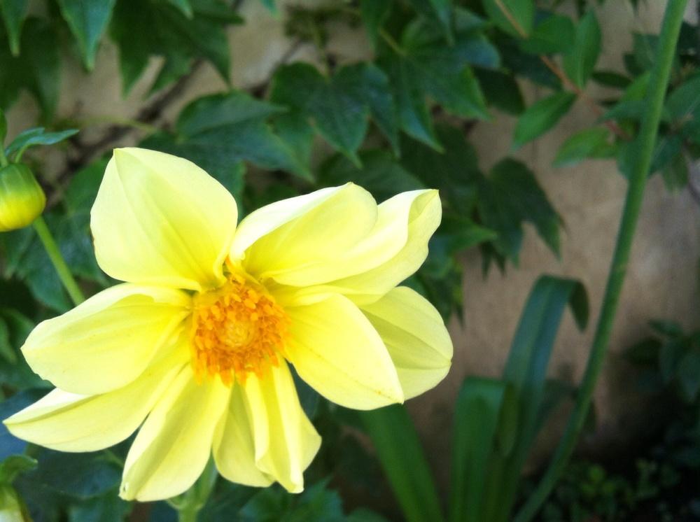 باغچه اى كوچک گلى تنها