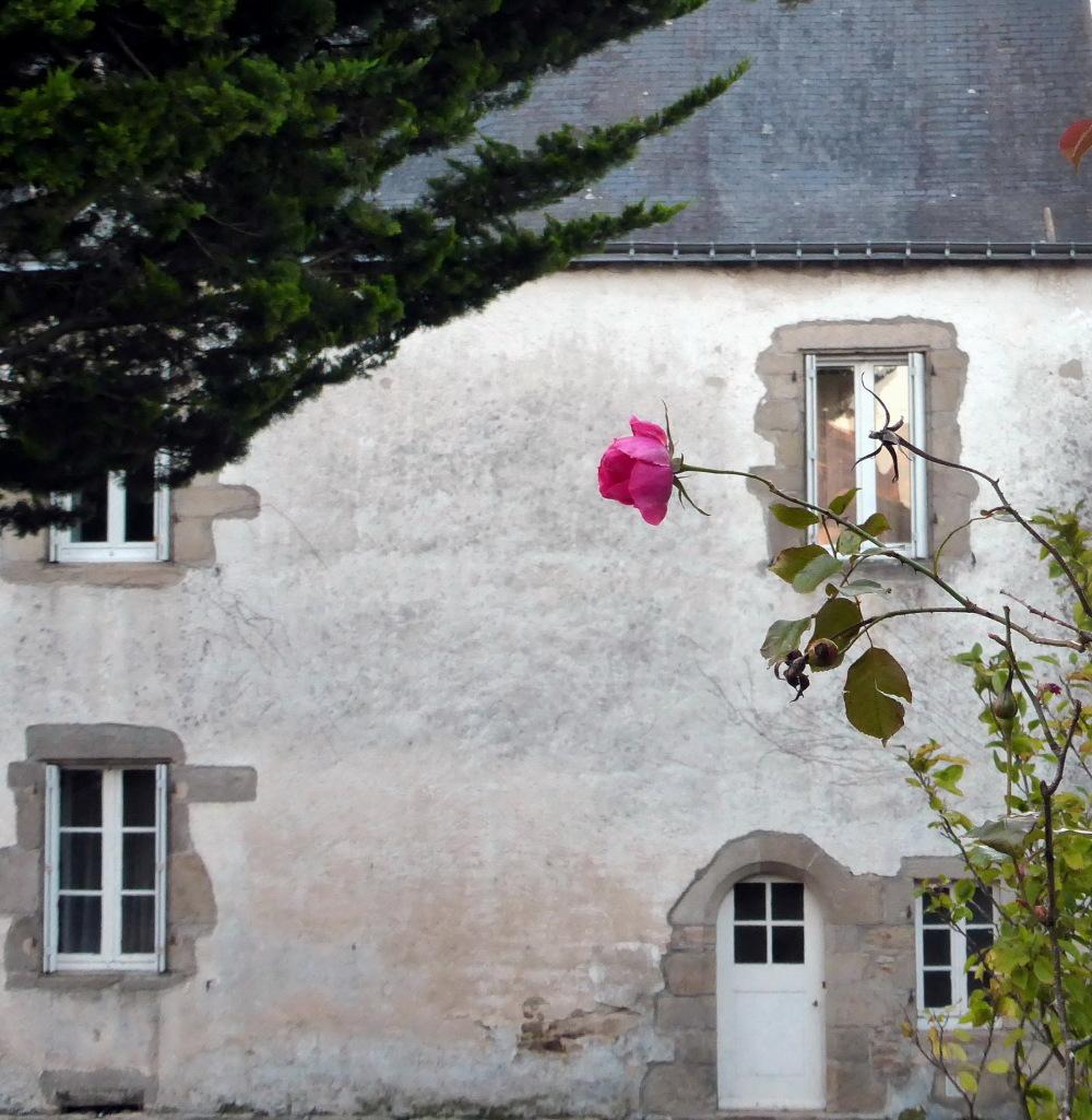 RENCONTRES D'AUTOMNE -6- LA ROSE...