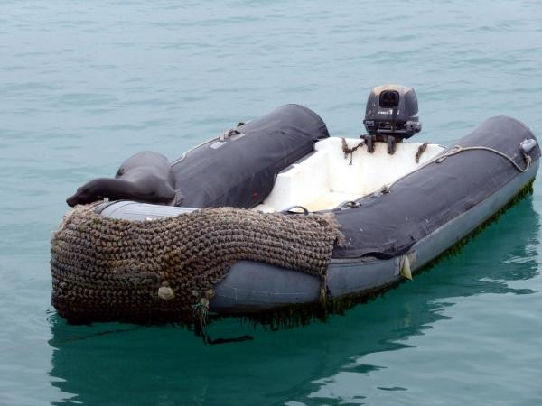 """ILES GALAPAGOS : """" sieste sur dinghy ...."""""""