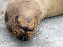 Iles Galapagos : &Quot; Qui Veut Un Bisou ? : )) &Quot;