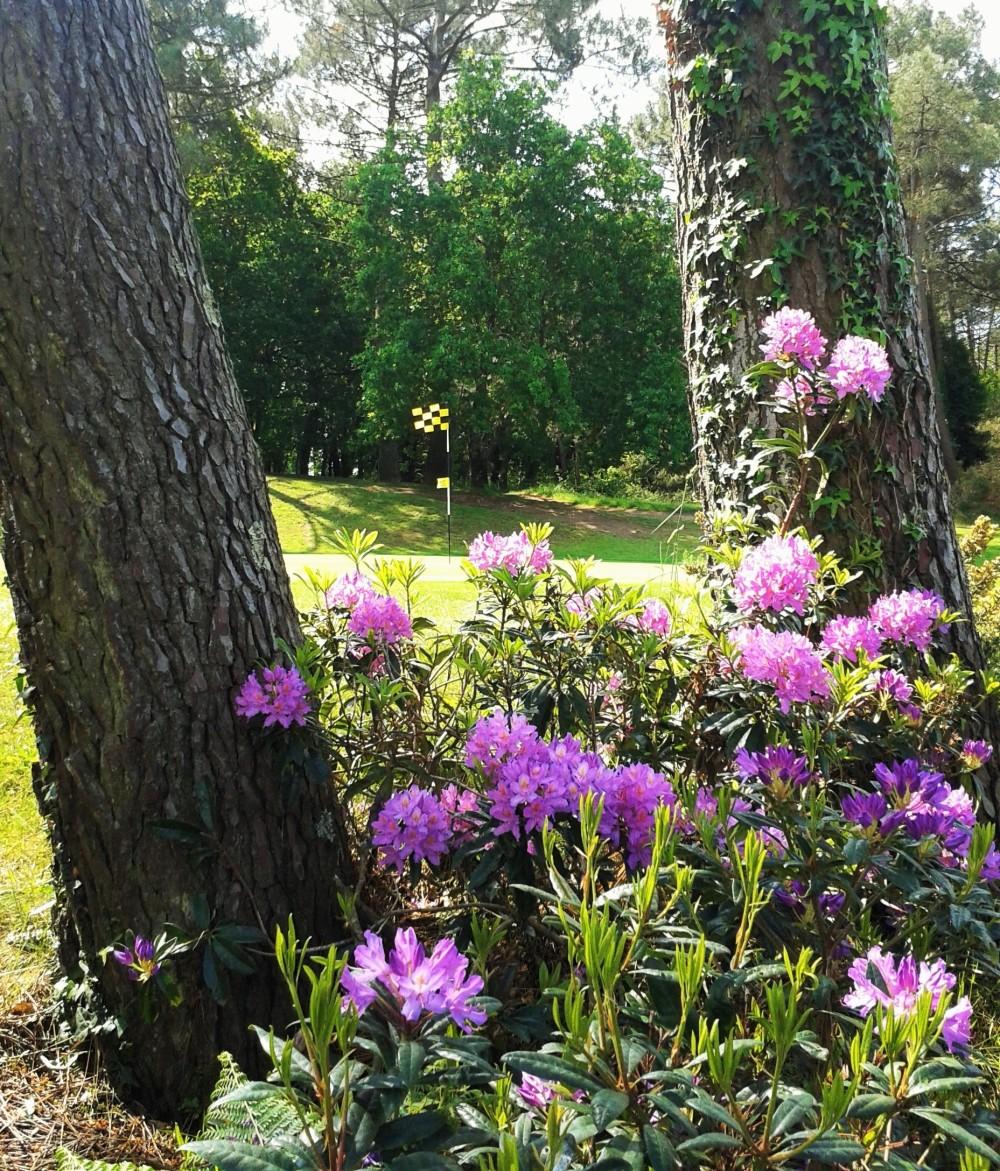 """ Mon""  golf ... en fleurs ...."