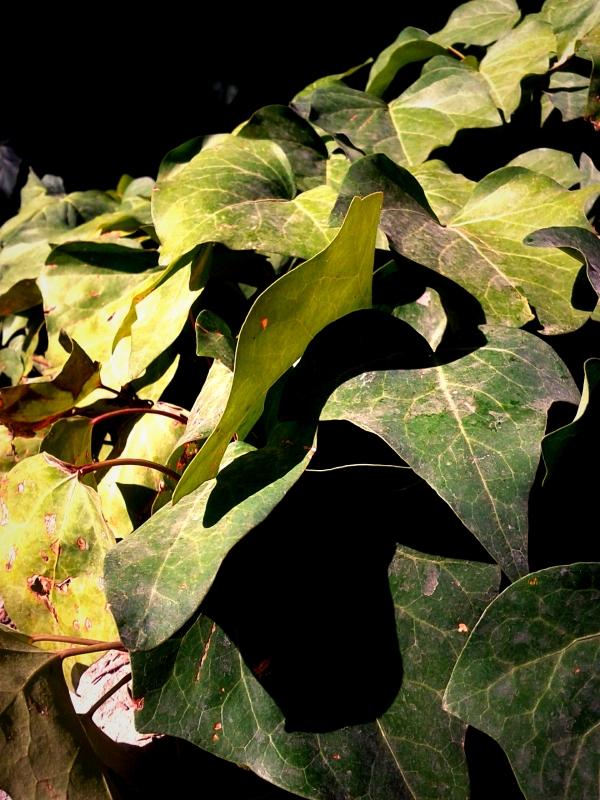 nature, plant, mahestan, a1 tower, garden