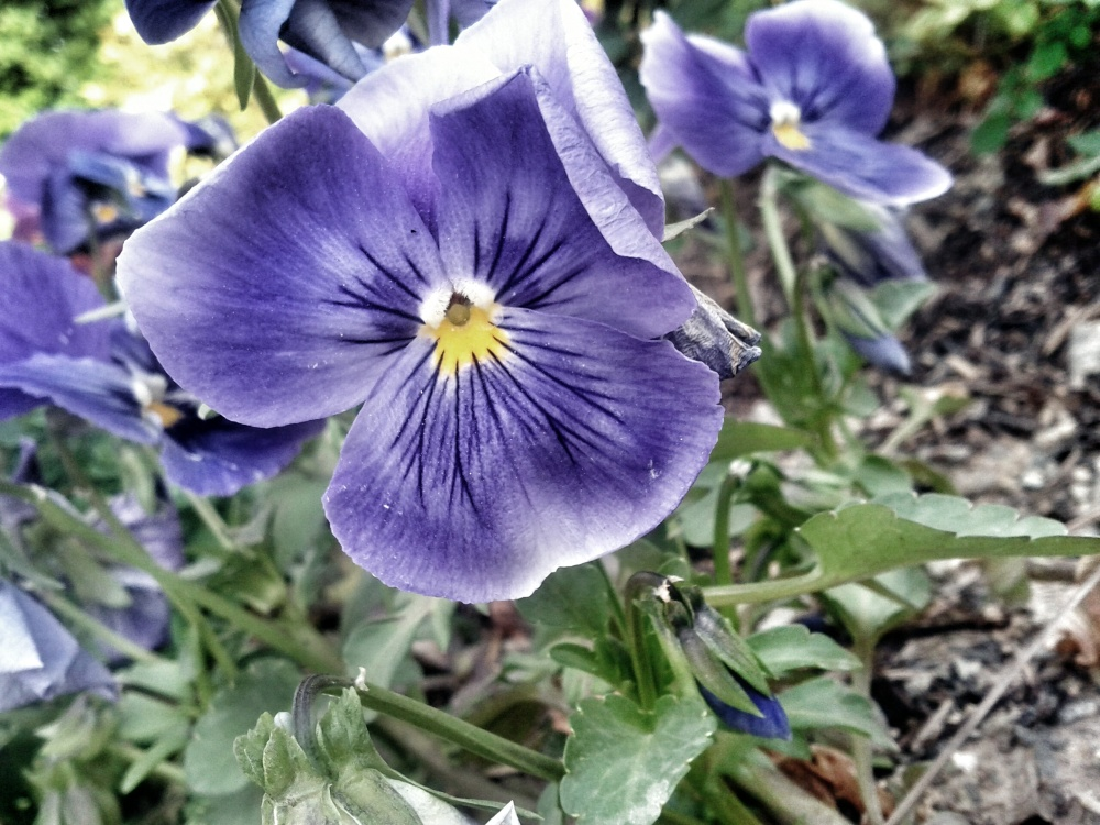 The Purple Flowers