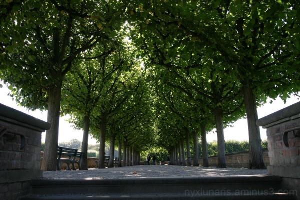 alley trees, park