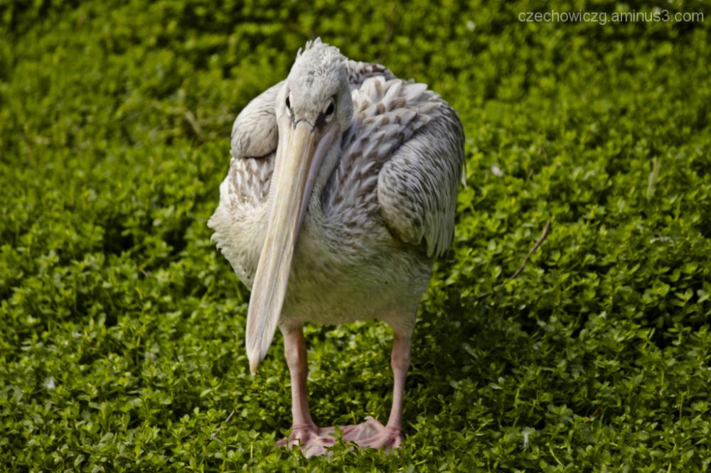 This bird looks bit funny :P