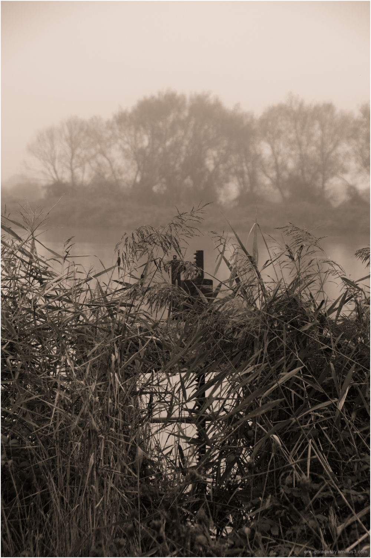 Au bord de l'étang # 3