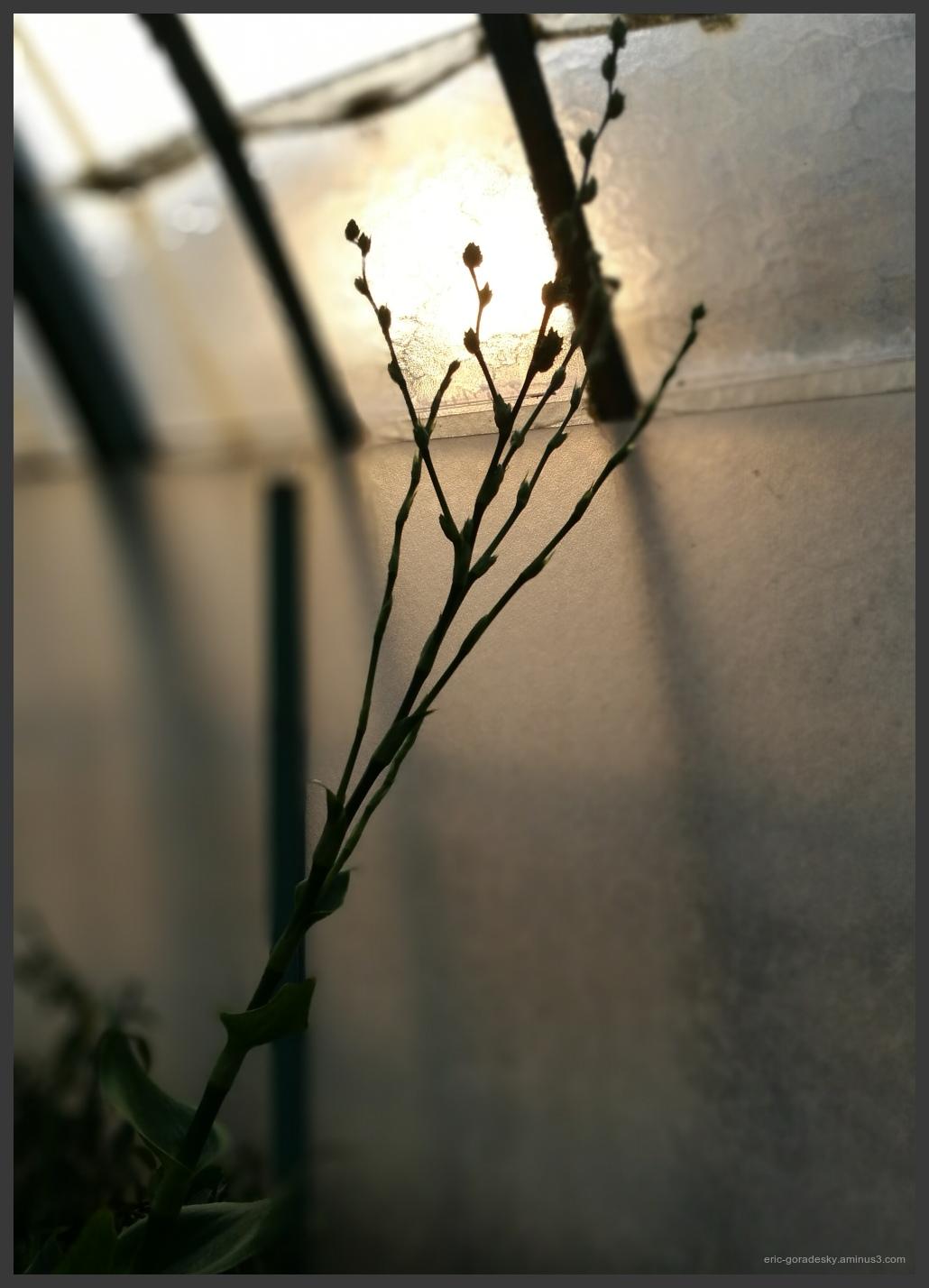 Morning light # 2