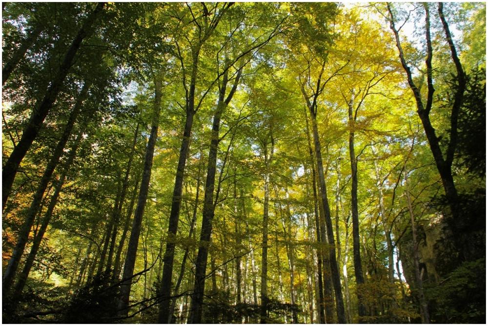 perdu dans la forêt