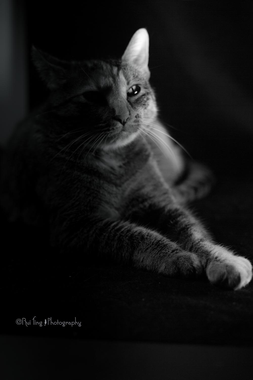 Film noir tila