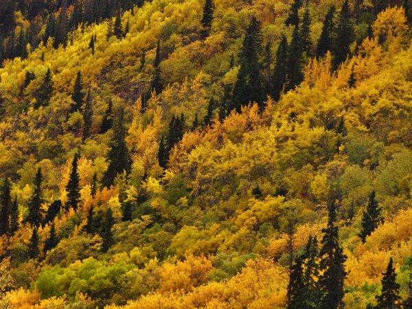 Autumn Alaska