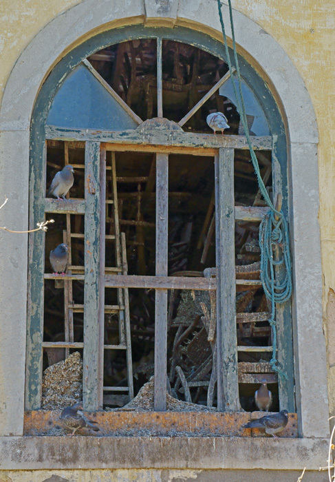 pigeons in a window