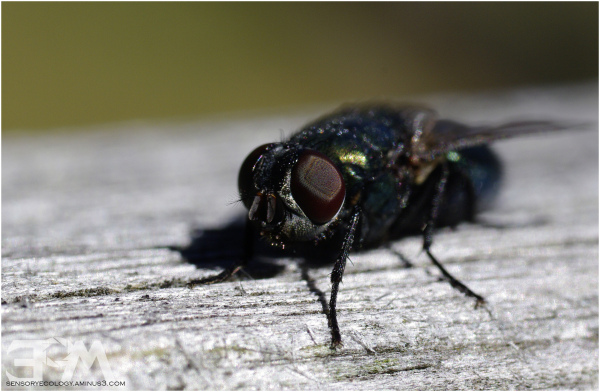 Fly in closeup