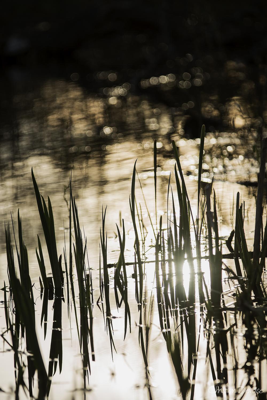 L'étang #2
