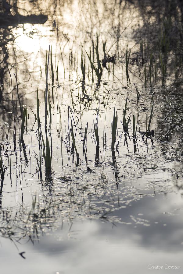 L'étang #3