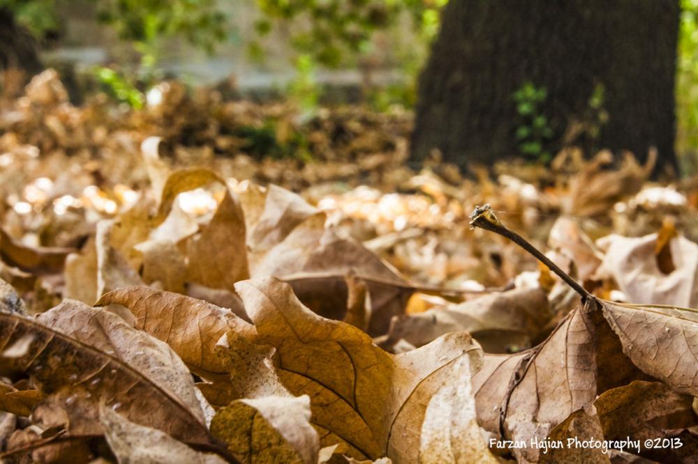 پاییییییز