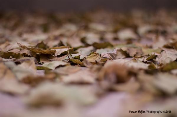 Track of Autumn