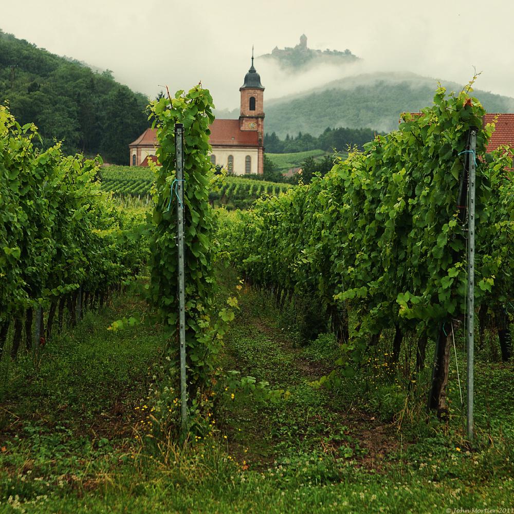 La route d vin en Alsace sous la pluie