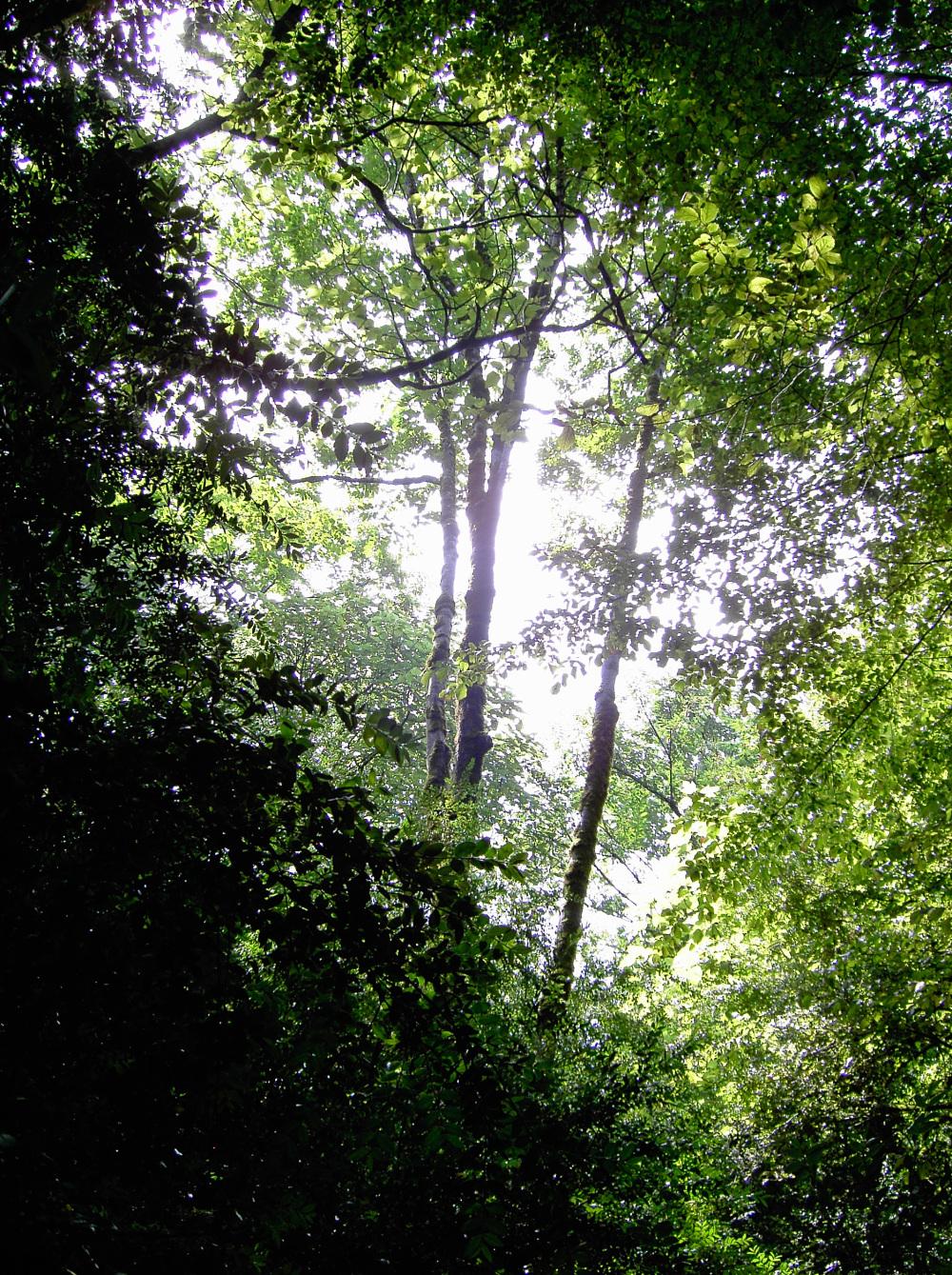 jungle woods tree light