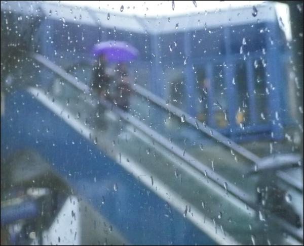 Le parapluie mauve