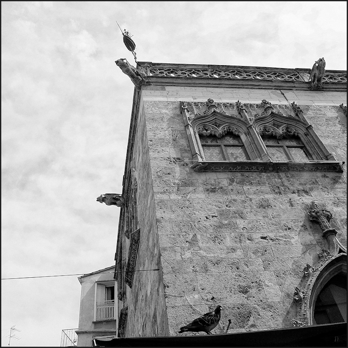 Un pigeon à Perpignan