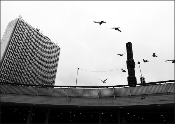 Oiseaux dans la grande ville