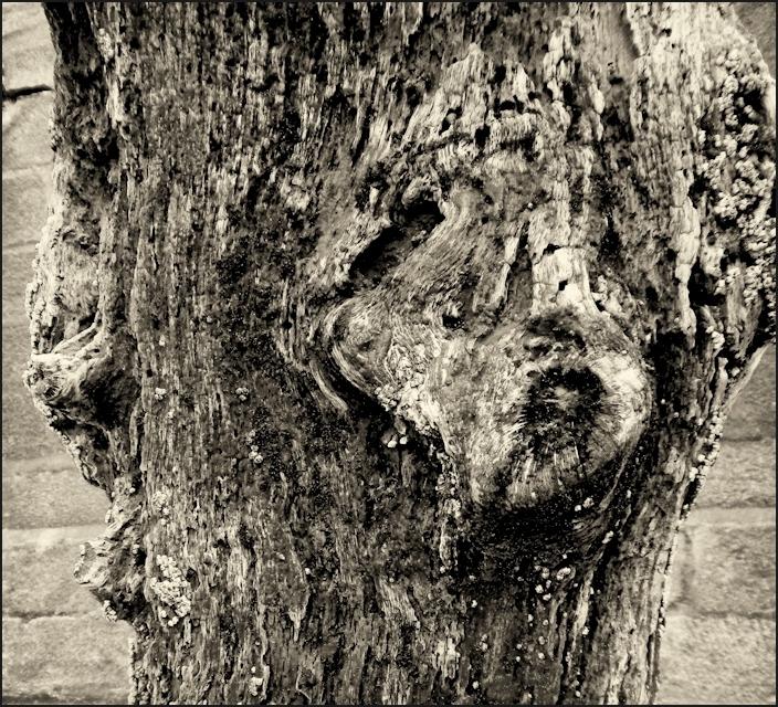 L'arbre buriné