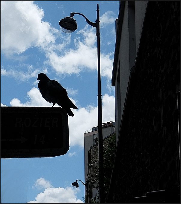 Oiseaux-D7262
