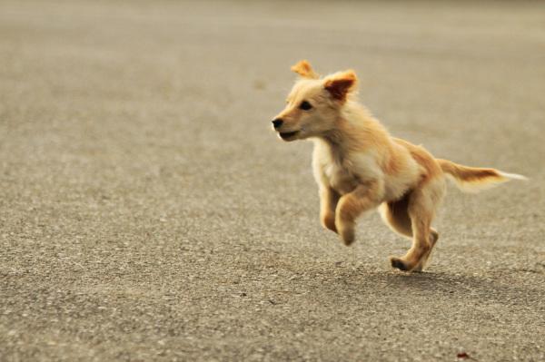 بدو بدو داری میرسی