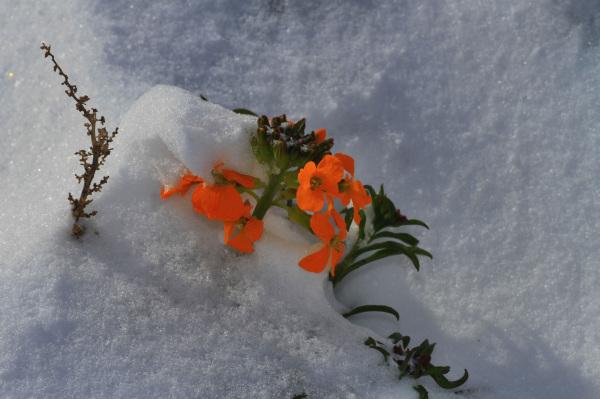 برف بهاری