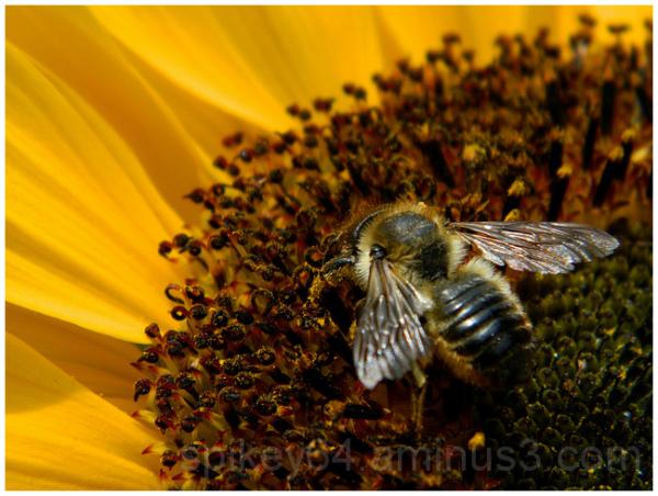 Bathing in Pollen
