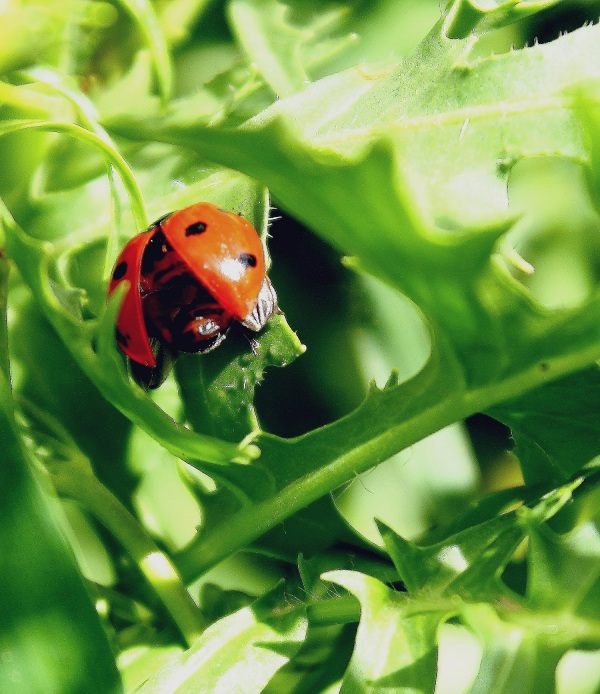 little red fellow : )