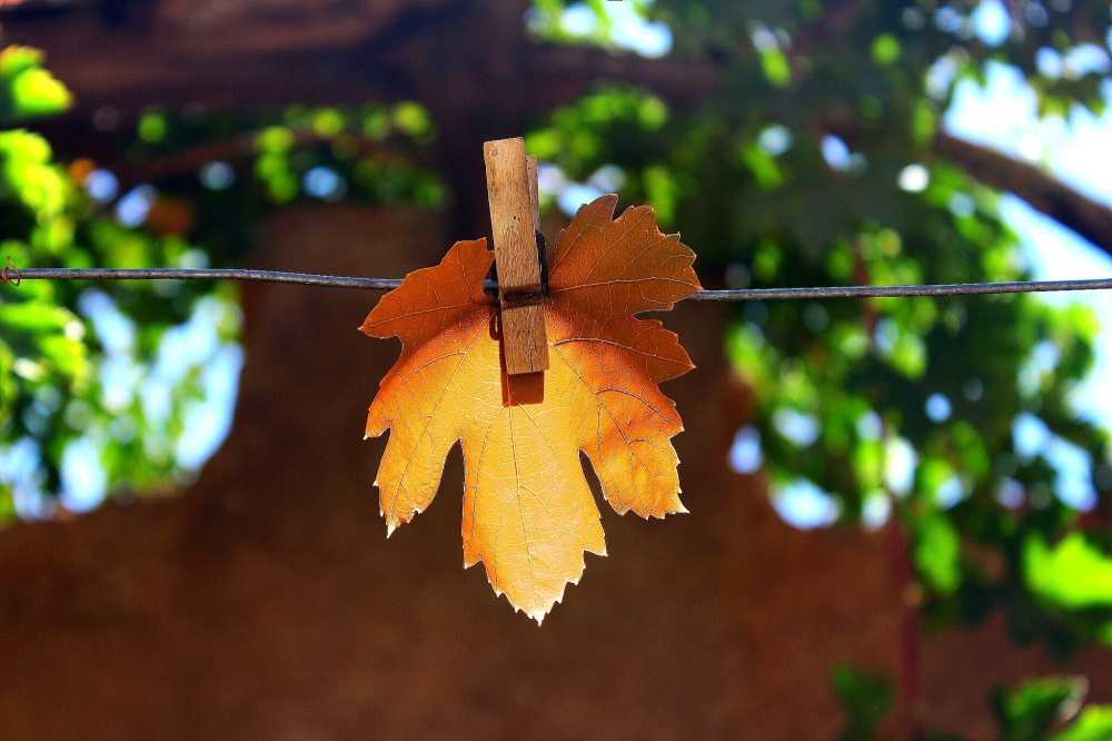 looking forward to fall...