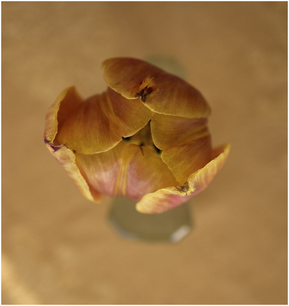 Delicately folded