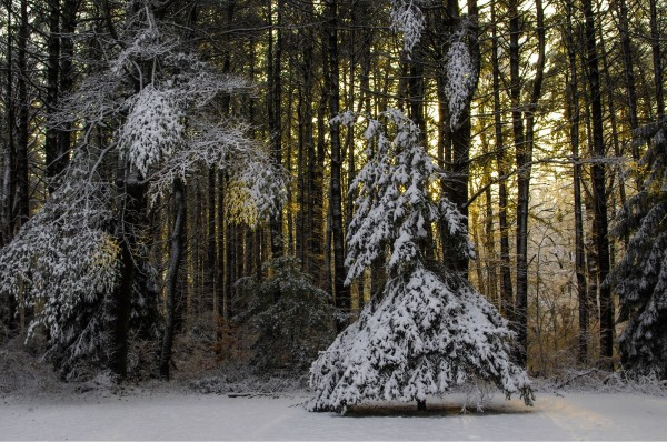 Dawn, Norris Reservation, Massachusetts.