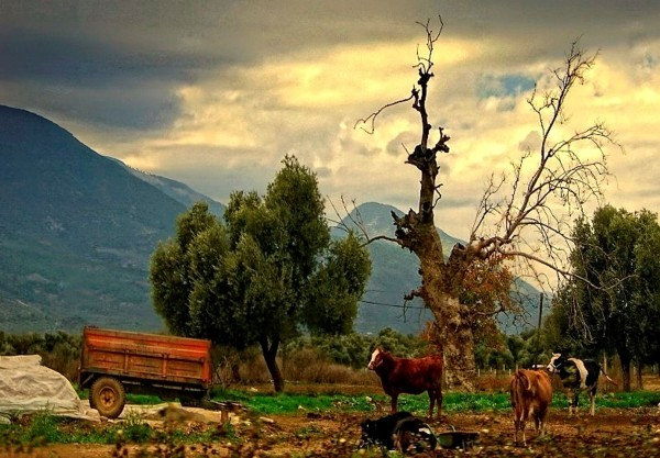 Farm, Bodrum Turkey.