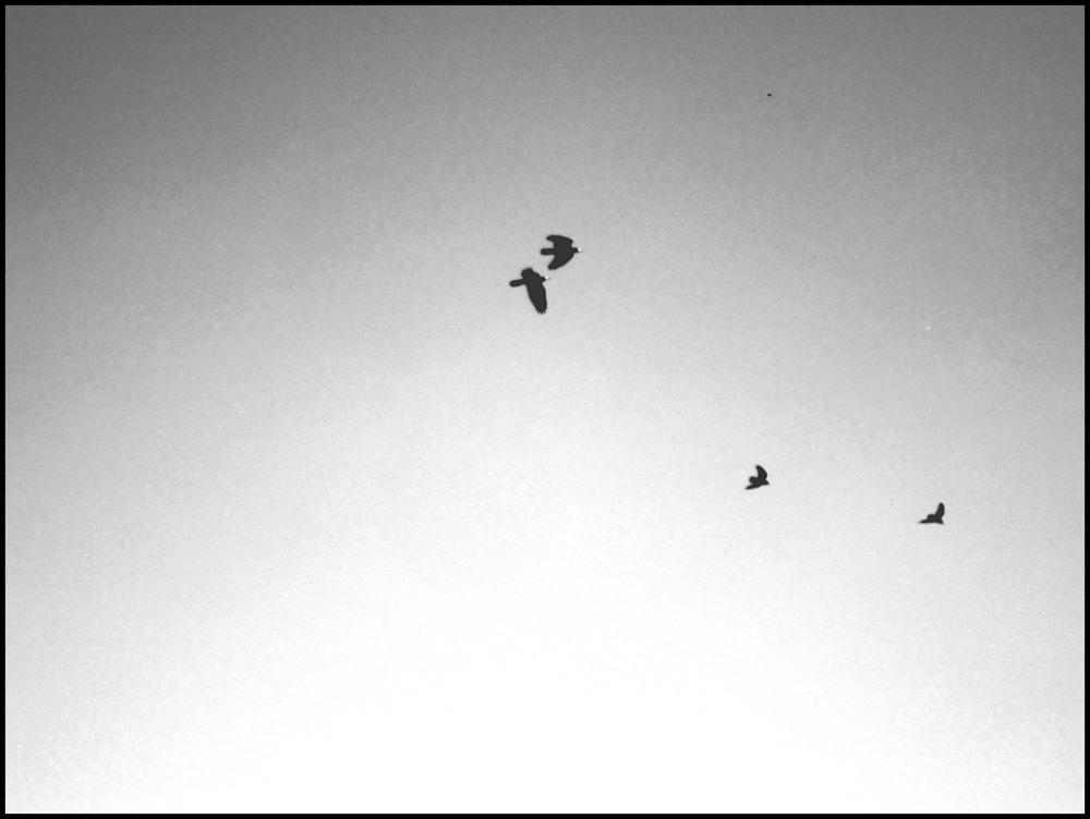 Flying ... (2)