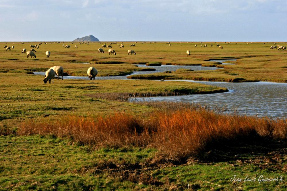 Les herbus / The grassy.
