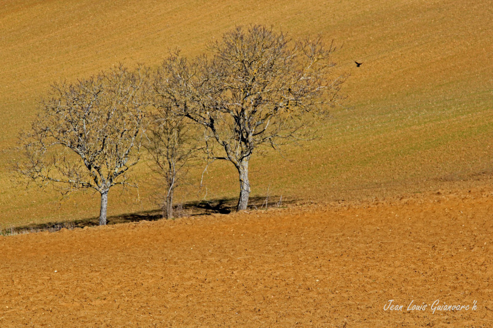 Les trois arbres / The Three Trees