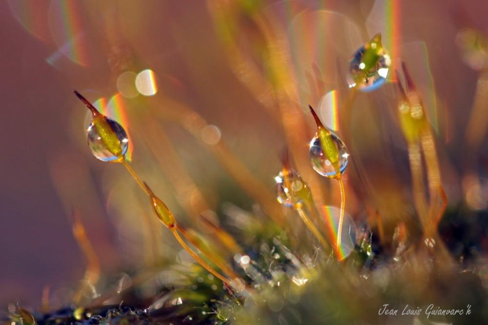 Des gouttes et des couleurs. / Drops and colors.
