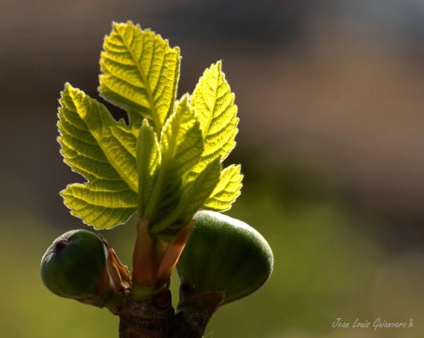 Vert printemps. / Green spring.