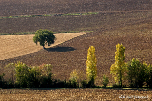 L'arbre seul. / The tree alone.