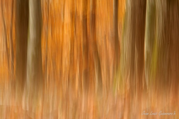 Fantaisies automnales.(1) / Autumnal fantasies.