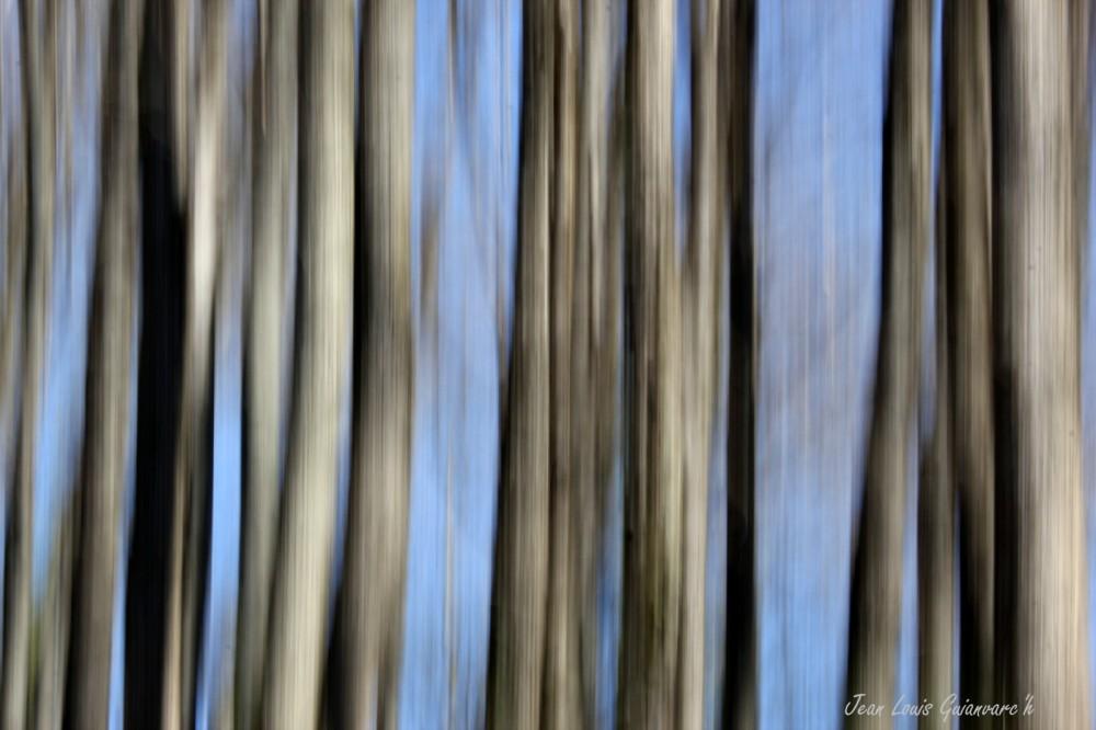 Au bois de Saint-Côme. /  Wood St. Côme