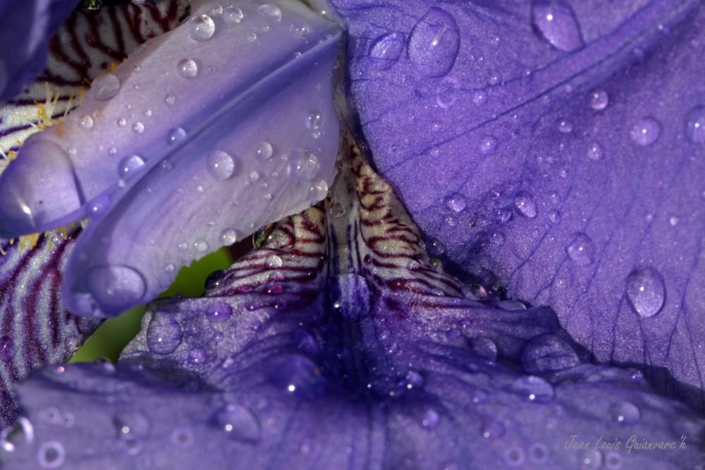 Pluie de printemps. / Spring rain.