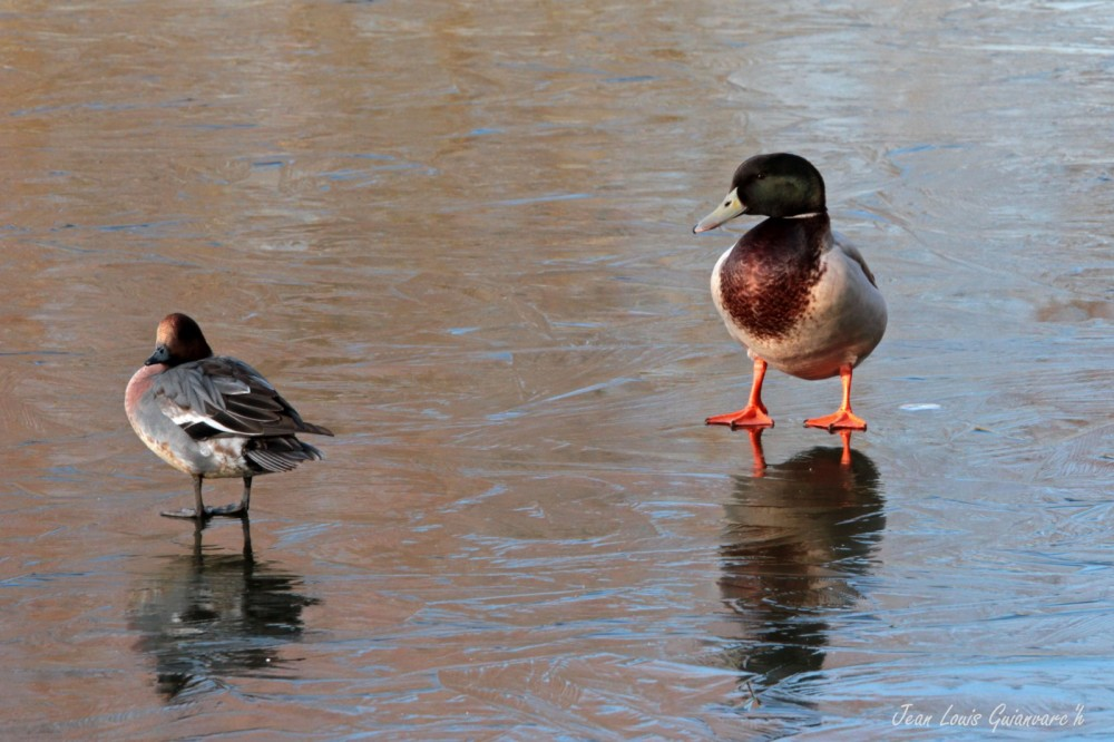 Un froid de canard. / Freezing cold.