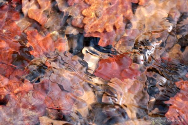 L'eau vive. / The living water.