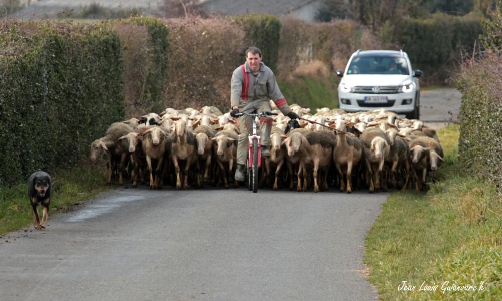 Priorité aux brebis! / Priority to the sheep!