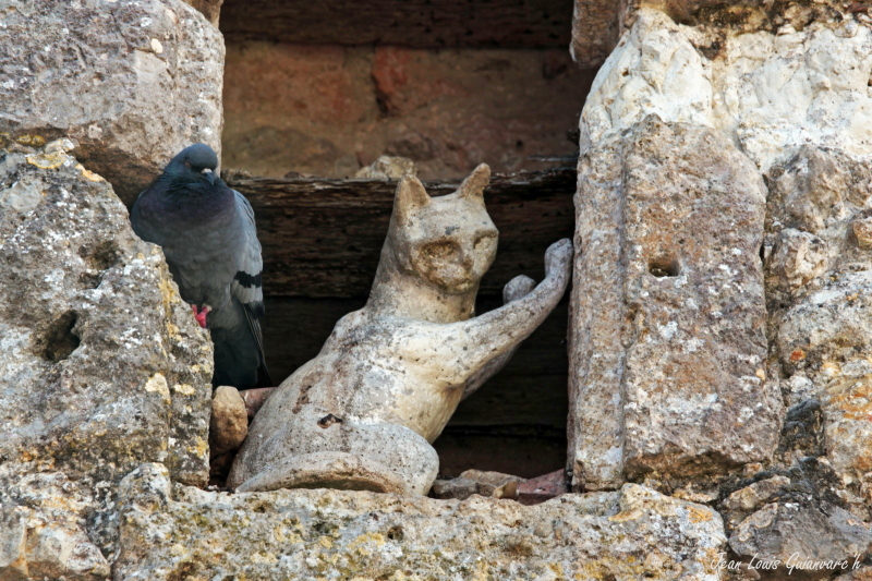 Le pigeon et le chat. / The pigeon and the cat
