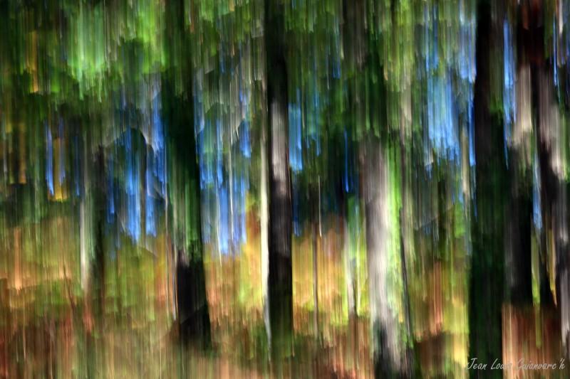 Dans la forêt lointaine...